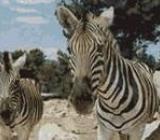 Img 1: Safari Aitana