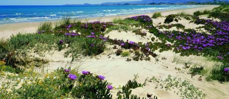 Dénia playa
