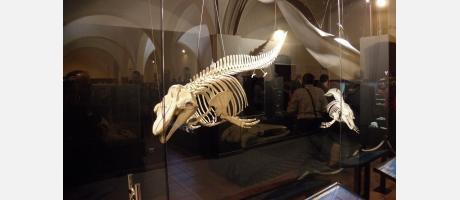 Img 1: Museo de Historia Natural de Torrevieja