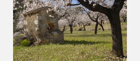 Img 1: Mandel blumen wanderweg im Alcalalí