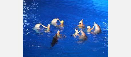 Delfines en el espectáculo del Oceanogràfic