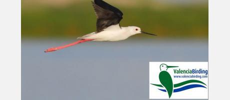 Turismo ornitológico con Valencia Birding