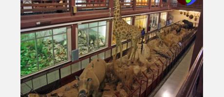 Imagen del Museo de Ciencias Naturales El Carmen