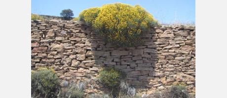 Una valla de piedra seca