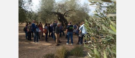 Visita a olivos milenarios