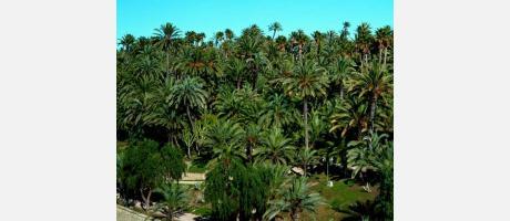 El palmeral de Elche