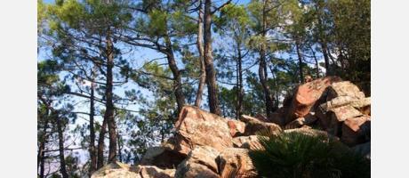 P.N.Desert_Les Palmes_Img3.jpg