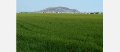 Campos de arroz en Cullera