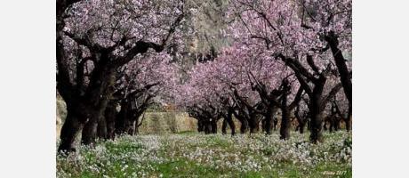 Árboles en flor Vía Verde Alcoy