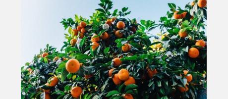 Ruta entre naranjos