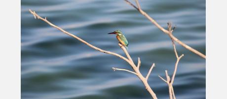 Birdwatching en la Comunitat Valenciana