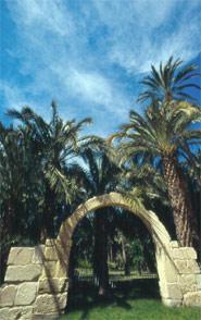 Gesamtheit des Palmenwaldes