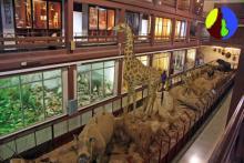 Museu de Ciències Naturals el Carme