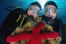 Ali-Sub, Ihr Zentrum für Unterwasseraktivitäten in La Vila Joiosa