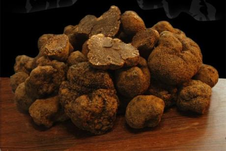 Black truffles from Morella, jewels to be enjoyed