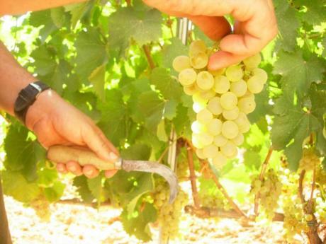 II Feria del Vino de Les Useres