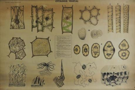 La Historia Natural en el Instituto Lluís Vives: espacio de enseñanza, lugar de ciencia