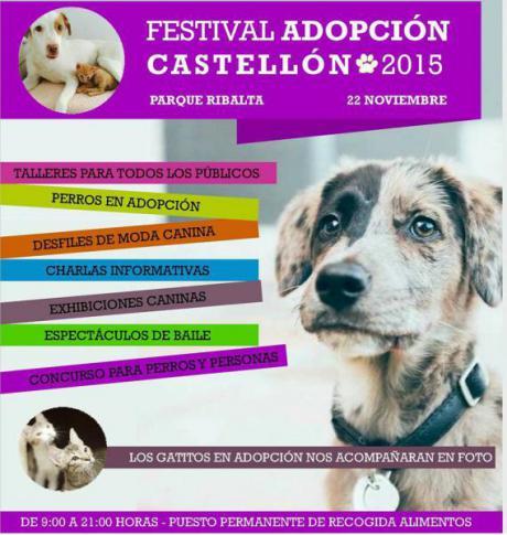 Festival adopción, en Castellón