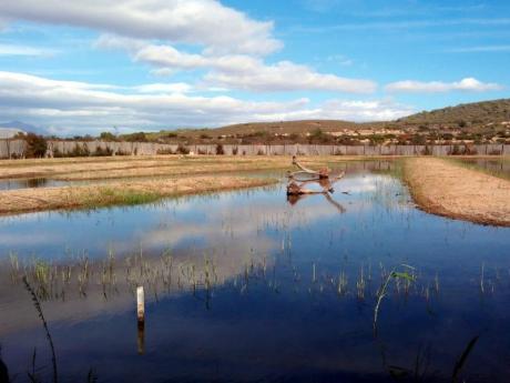 El Clot de Galvany, ein natürlicher Ort zum Entdecken