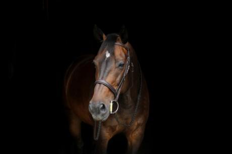 Enjoy in València the International Horse Riding Tournament 2019