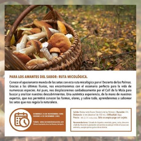 Ruta micológica. Programa Oficial Visitas Guiadas Benicàssim
