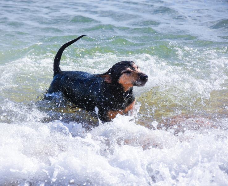 Playa petfriendly El Xarco