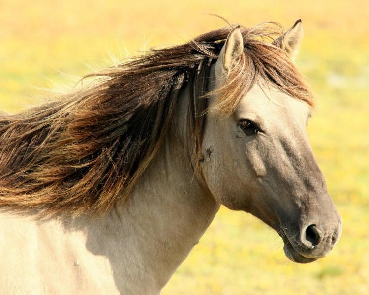 A caballo en la Comunitat