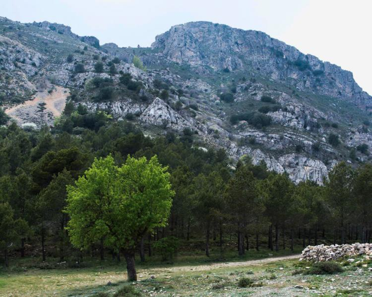 Montcabrer (Sierra de Mariola)